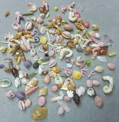 20 Dollhouse Miniature Mini Seashell Assortment Variety Tiny Small Shells Art