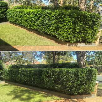 Lawn mowing Hedge trimming and gardening services