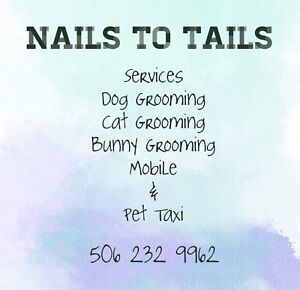 BIG OR SMALL WE GROOM THEM ALL!