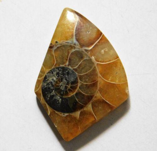 38.75 Cts Natural Ammonite Loose Cabochon Gemstone 37.5X25.5X5MM A-13