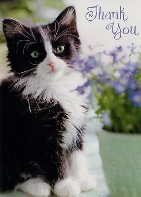 Black And White Cat Thank You Card Greeting Card White Envelope Black And White Cards