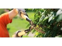 LOCAL GARDENER,LANDSCAPER AVAILABLE IN YOUR AREA TODAY.CALL NOW AT 07730463693