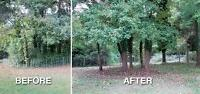 Tree Trimming / Removal