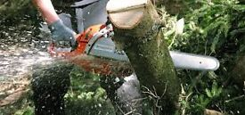 Forestry - Chainsaw operators