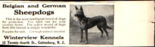1912 Belgian and German Sheepdogs Dog Winterview Kennels Vintage Print Ad 768