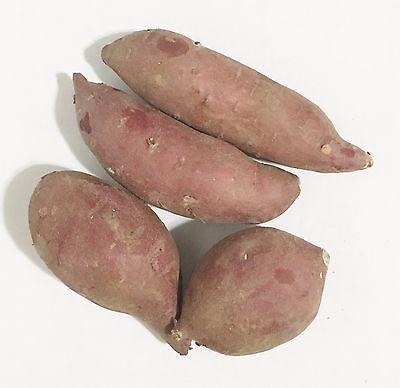 16oz Fresh Japanese Yam Sweet Potato