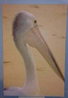 Pelican Canvas 50cm x 70cm