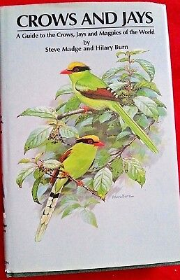 1994 1st,Burn CROWS AND JAYS: A GUIDE,Magpies,Identification Guide,Bird Watching