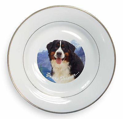 Bernese Mountain Dog Gold Rim Plate in Gift Box Christmas Present, AD-BER6yPL