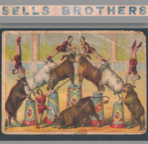 Sells Brothers Circus Performing Colorado Cattle Railroad Show 1800