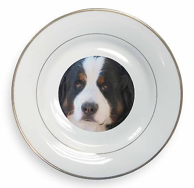 Bernese Mountain Dog Gold Rim Plate in Gift Box Christmas Present, AD-BER5PL
