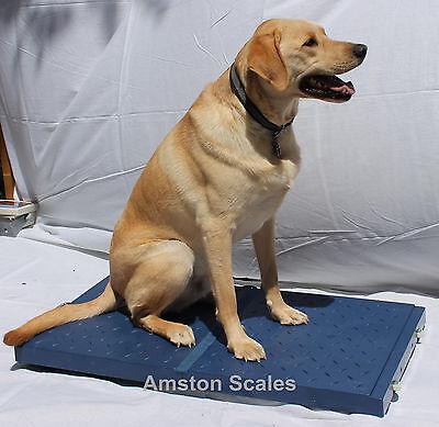 32 Off Usedopen Box 400 Lb 38 X 20 Vet Veterinary Animal Digital Scale Dog Pet