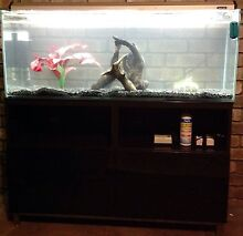 Fish tank aquarium 4ft bargain with everything Bateman Melville Area Preview