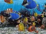 islandfish7