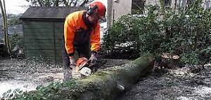 Tree Removal /Cutting / Lot Clearing (Insured)