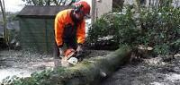 Tree Cutting/ Trimming/ Removal Services