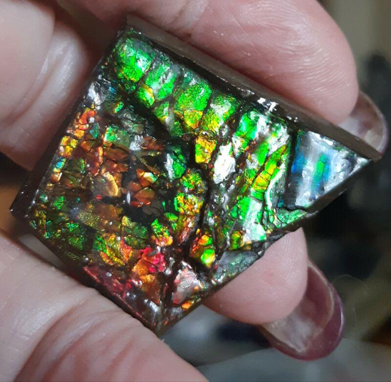ammonite ammolite Display piece 33x33.6x5.2