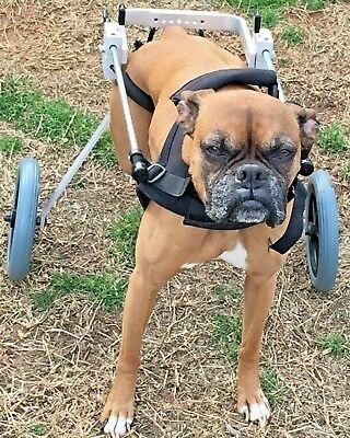 Medium Best Friend Mobility Dog