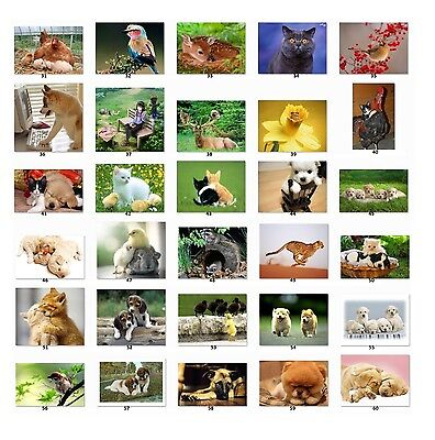 30 Personalized Return Address labels Cute Animal Pictures Buy 3 get1 free {c2}