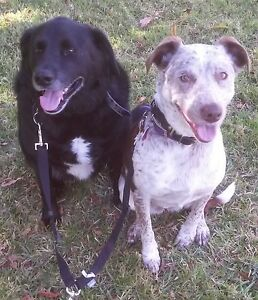 Noonies Pet Care - Pet Sitting