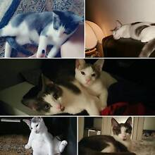 Rescue kittens need a home NOW! Surfers Paradise Gold Coast City Preview