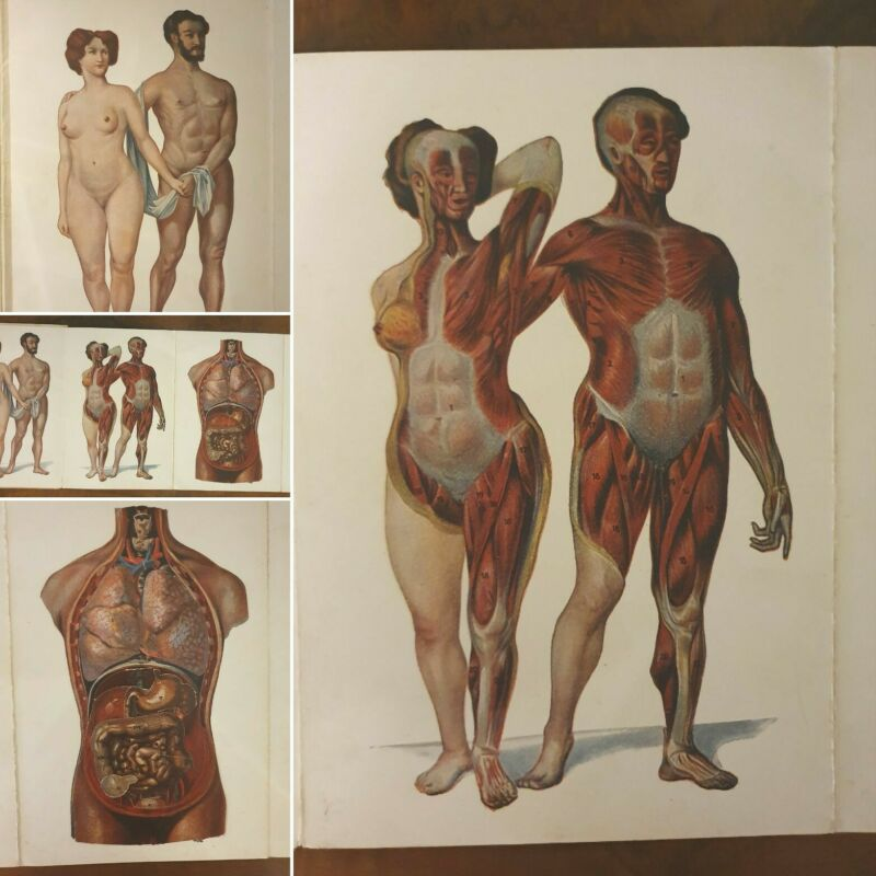 VINTAGE FRENCH ANATOMY FOLD OUT MODEL: c1920 Rare