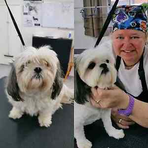 New Dog Groom Salon Open In Chirn Park Labrador Gold Coast City Preview
