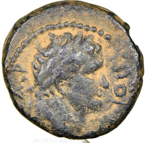 Roman Syria Decapolis Gadara Titus as Caesar 79-81AD AE NGC VF, repatinated