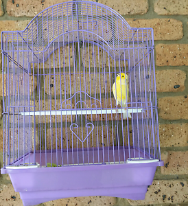Whistling Male Canary with Cage Liverpool Liverpool Area Preview