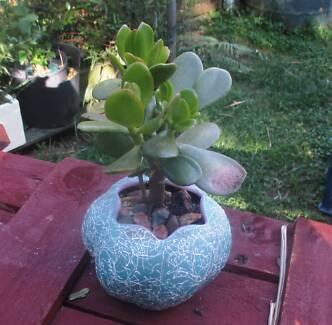jade in novelty pot