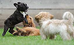 little.pup stuff