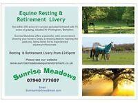 Sunrise Meadows Equine Retirement - Horses and Ponies