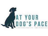 Dog walking (solo & group walks available), Buckshaw Village, Leyland, Chorley. At Your Dog's Pace