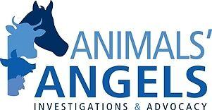 Animals' Angels