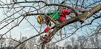 Looking for an Arborist