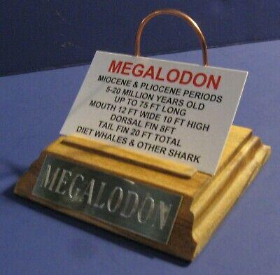 MEGALODON SHARK TOOTH 4