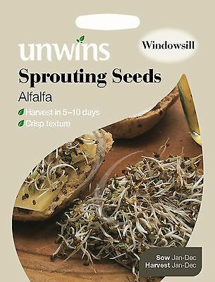 Unwins Pictorial Packet - Sprouting Seeds Alfalfa - 7000 Seeds