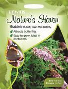 Buddleia Seeds