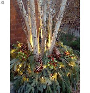 Branche de bouleau « decoration Noel» ( spécial 8 /30$)