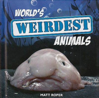 World's Weirdest Animals BRAND NEW BOOK by Matt Roper (Hardback, 2009)