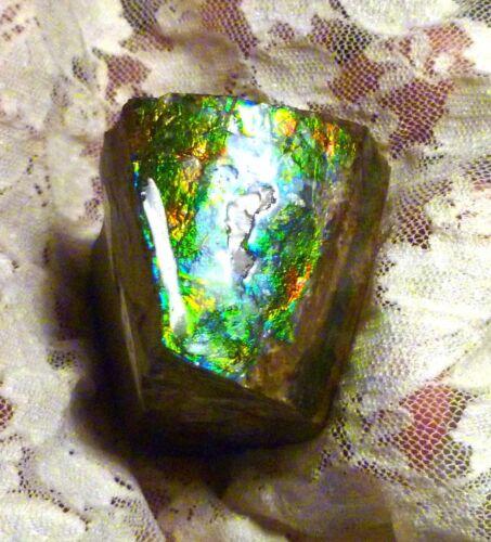635.3 carats! Purple, Green, Blue Ammolite Rough Domed Top 52x52mm
