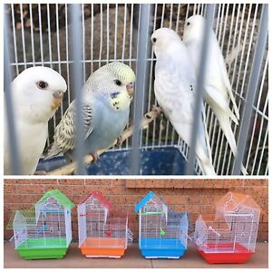 Great Xmas Gift: Baby Budgie $20: New cages $30 Kellyville The Hills District Preview