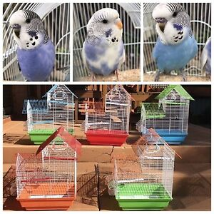 Baby budgie with new cage $45: otherwise birds $15 each Kellyville The Hills District Preview