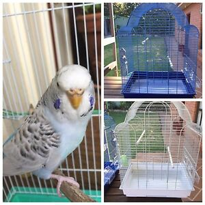 Texas clearbody female Budgie $40: New Cages $40 Kellyville The Hills District Preview