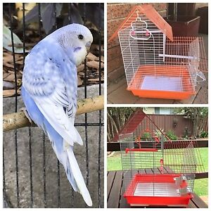 Baby male budgie $20: New cages also available Kellyville The Hills District Preview
