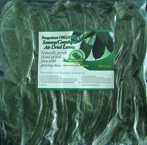 ORGANIC TEA LEAVES 100 PCS. AIR DRIED GUANABANA / GRAVIOLA ... Dried Guyabano Leaves