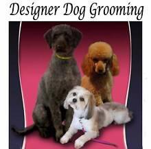 Designer Dog Grooming Bagdad Southern Midlands Preview