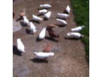 Doves London
