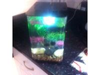 Biorb flow 15lt fish tank