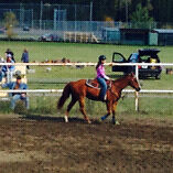Looking for a project horse
